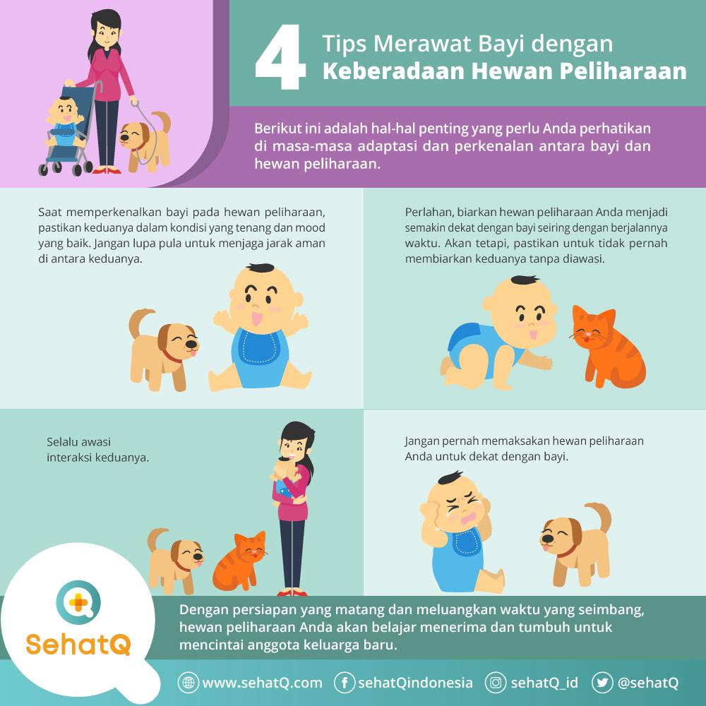 merawat bayi saat ada hewan peliharaan