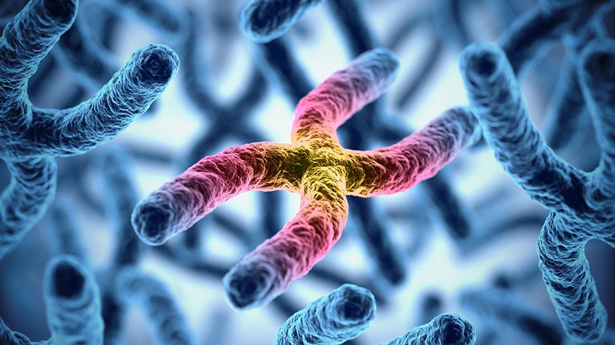 Kelainan kromosom adalah penyebab yang kerap ditemukan pada kasus abortus insipiens