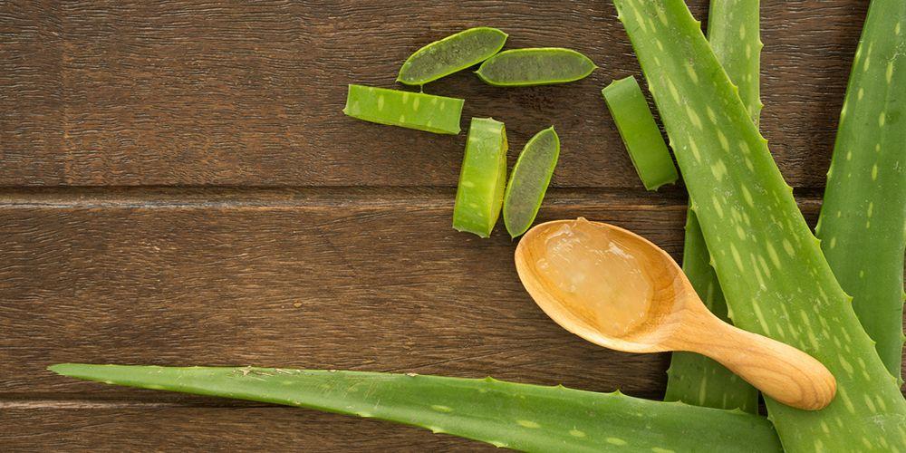 Cara menggunakan lidah buaya untuk jerawat bisa berasal dari tanamannya