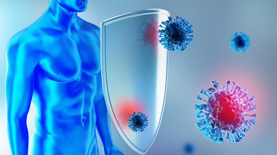 Imunomodulator membantu mengatur respons sistem imun