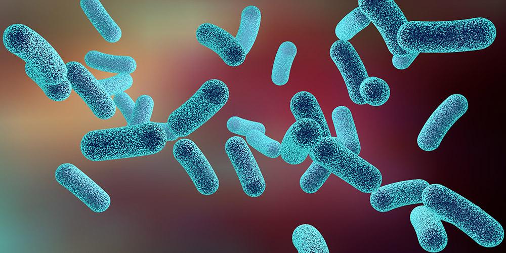 Penyakit kusta disebabkan oleh bakteri Mycobacterium leprae