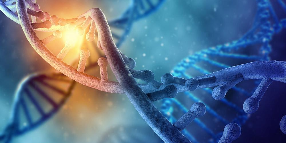 Gen menentukan bentuk dan bagian pada manusia