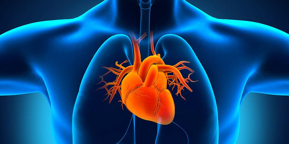arteri pulmonalis