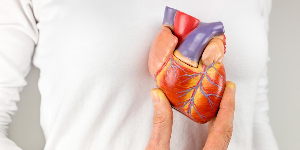 Paru-paru juga berfungsi untuk melindungi jantung saat benturan