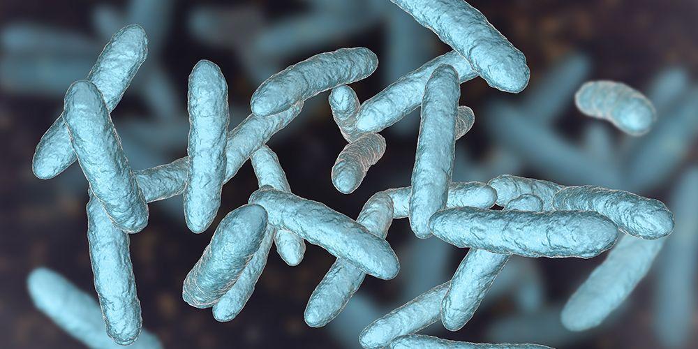 Probiotik adalah mikroorganisme yang baik bagi pencernaan
