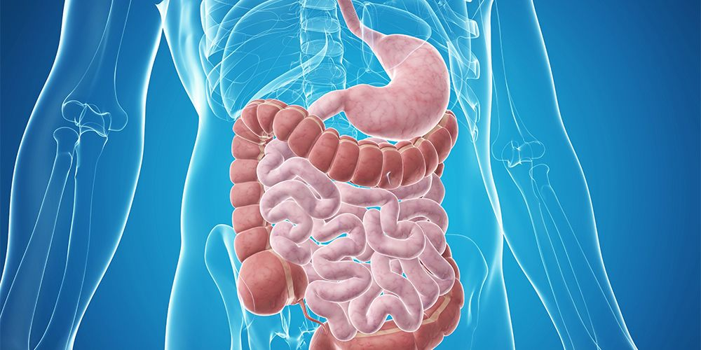 Probiotik baik untuk pencernaan