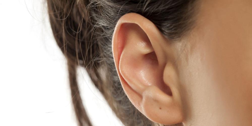 Kulit telinga sensitif, sehingga bisa jadi titik rangsang wanita