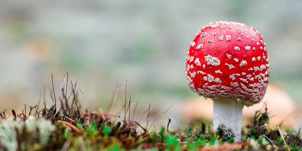 Infeksi jamur penyebab luka pada penis