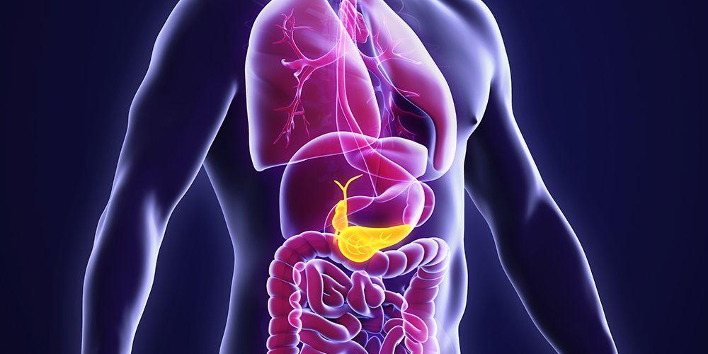 Letak pankreas di tubuh