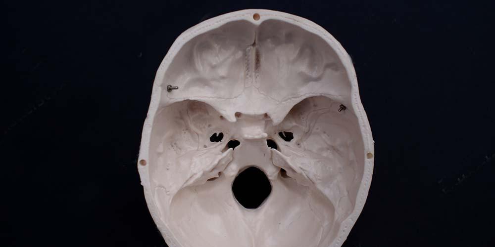 tulang tapis membentuk hidung bagian dalam