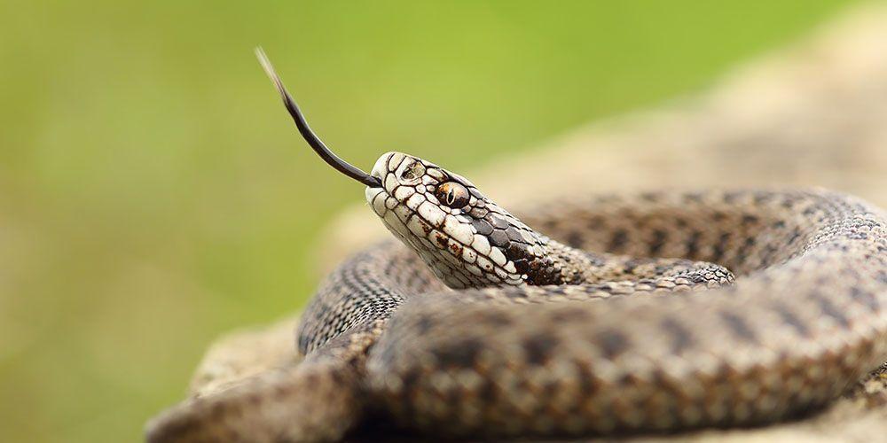 Virus corona 2019-nCOV diduga berasal dari ular