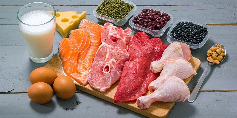 Protein nabati dan hewani