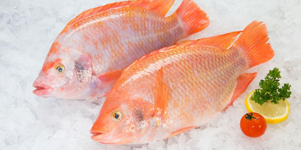 Ikan makanan sehat untuk ibu hamil 2 bulan