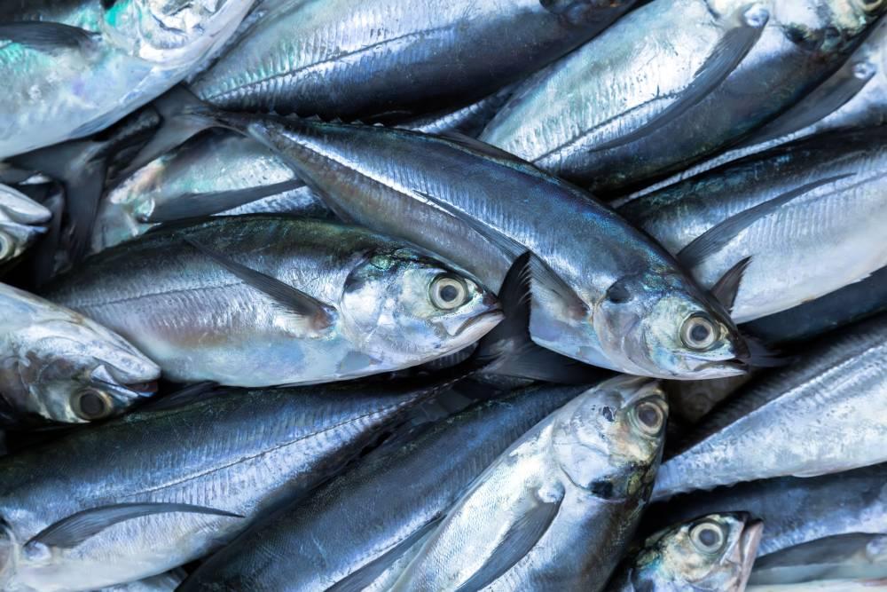 Mata ikan yang segar akan tampak cerah, jernih, dan segar
