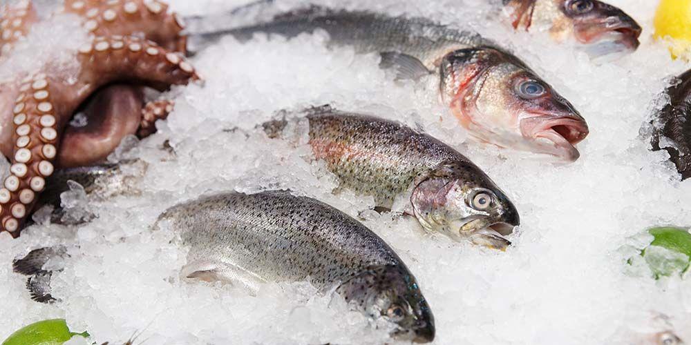 virus corona di makanan beku, salah satunya ikan