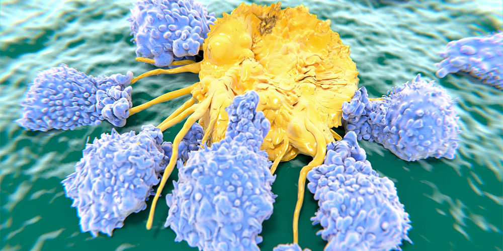 Manfaat buah berenuk berpotensi mengurangi risiko kanker dan tumor