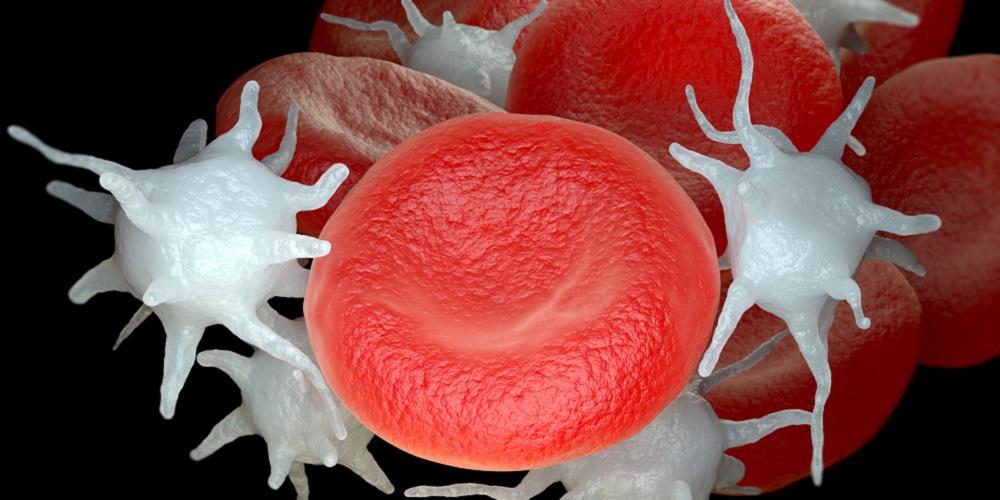 Gambar platelet darah dan sel darah merah