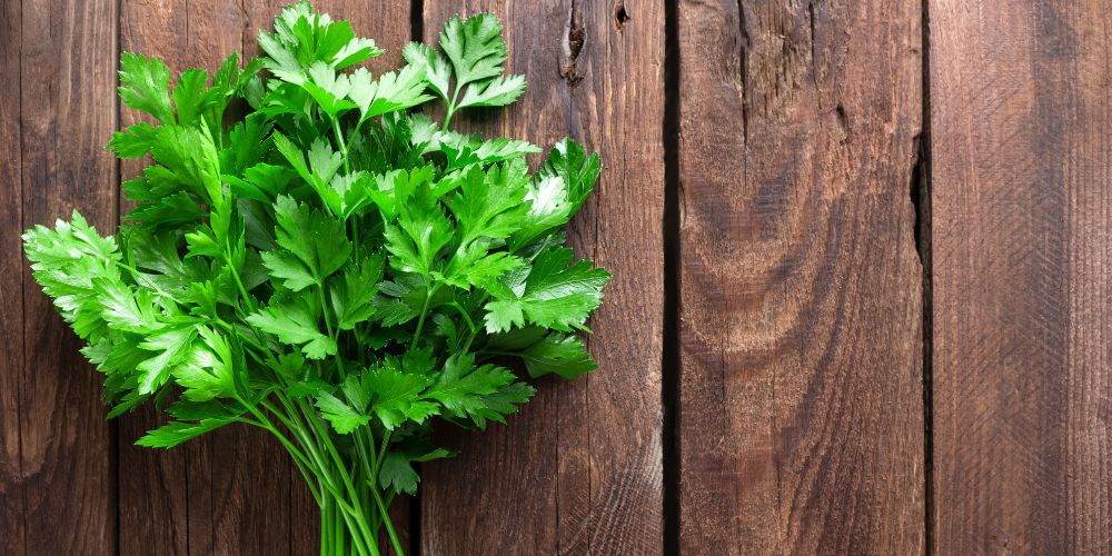 Daun parsley