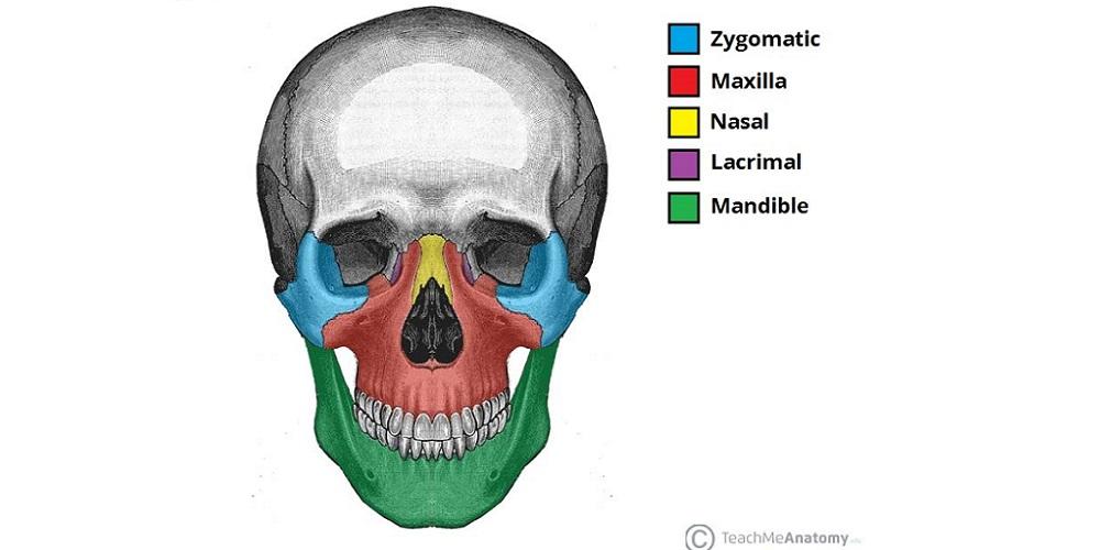 Gambar anatomi tulang wajah