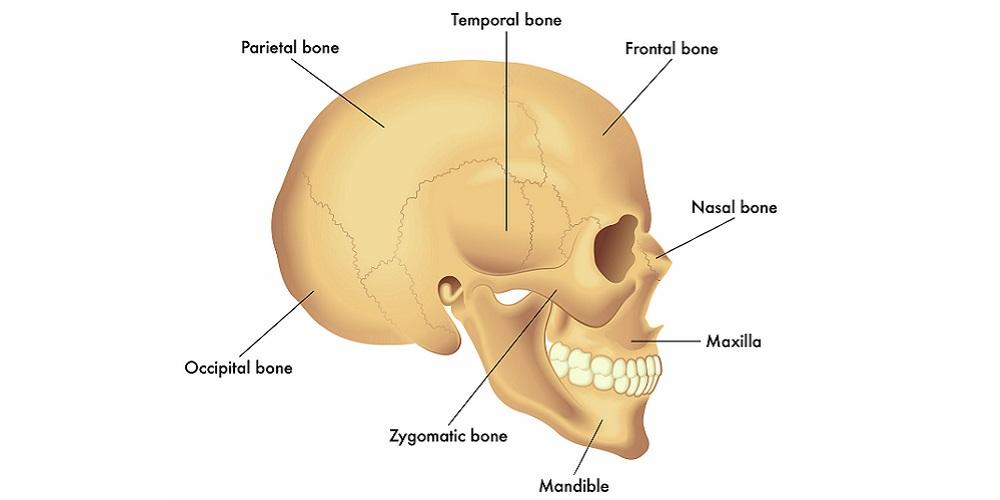 Gambar anatomi tulang tengkorak