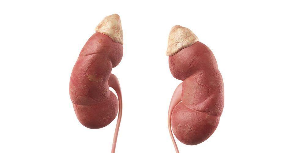 Azotemia adalah kerusakan pada ginjal yang harus diwaspadai
