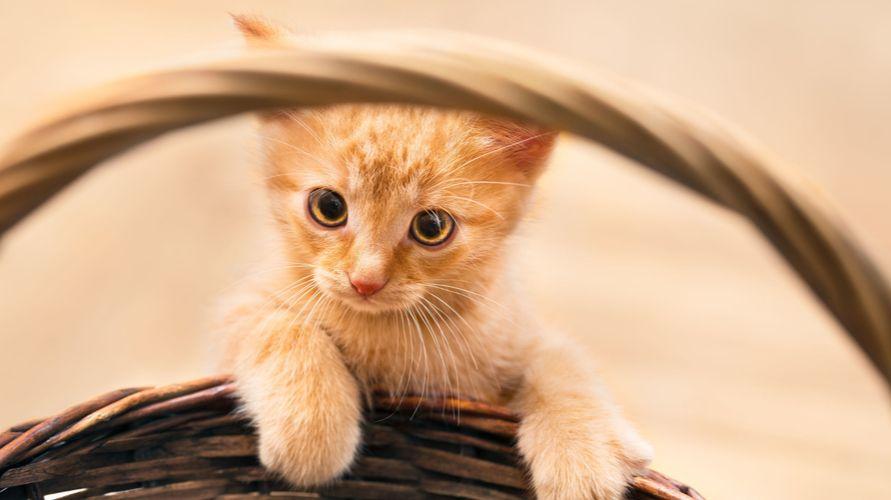 Gejala alergi kucing bermacam-macam, tergantung di mana alergen hinggap di tubuh kita