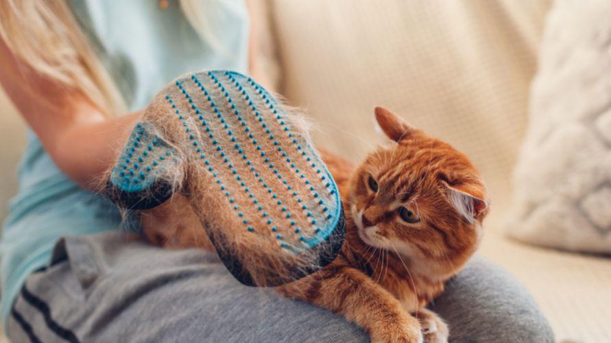 Gejala alergi kucing dapat diredakan dengan berbagai macam obat alergi