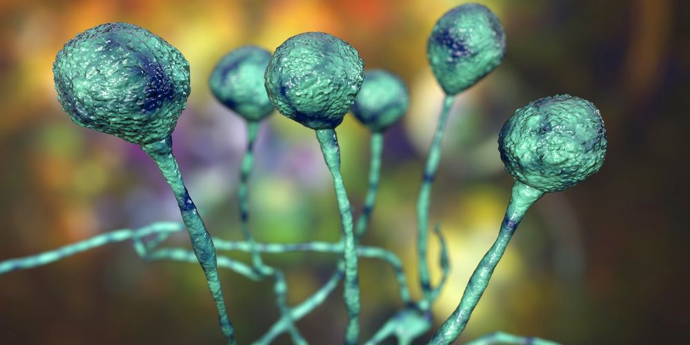 Kingdom fungi dibagi empat salah satunya zygomycota