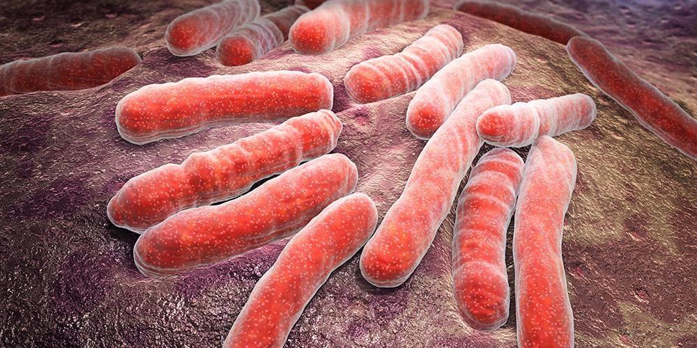 Manfaat sereh lainnya adalah mencegah infeksi bakteri