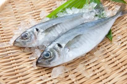 Ikan makarel mengandung merkuri yang bahaya bagi saraf janin