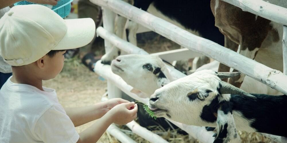 anak kecerdasan naturalis selalu menyayangi makhluk hidup dengan memberi makan binatang