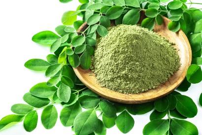 Khasiat daun kelor untuk kolesterol dapat dirasakan baik dalam bentuk bubuk maupun sayuran