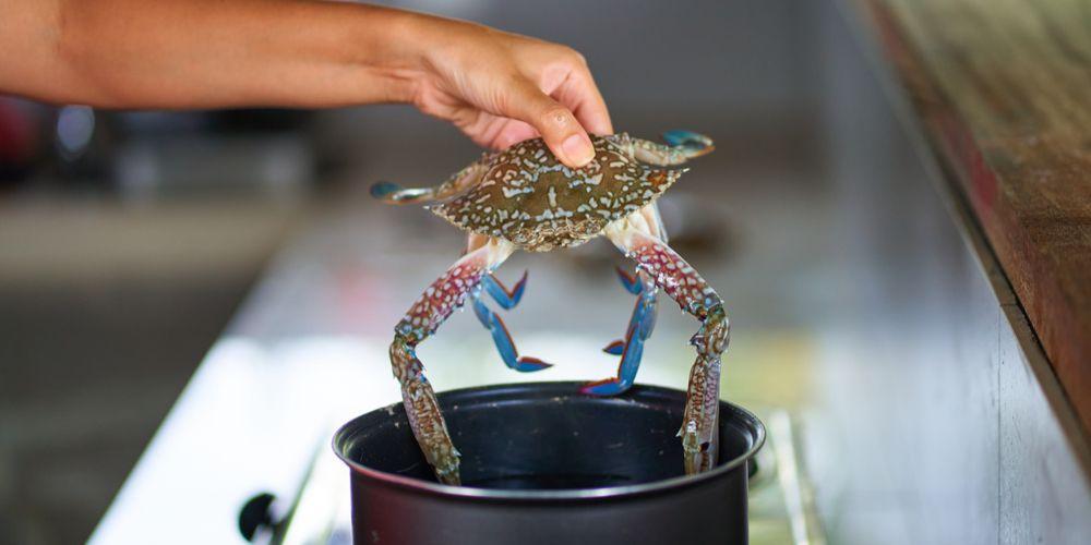 Cara membersihkan kepiting yang benar, harus direbus dulu