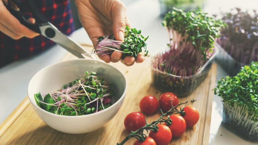 Microgreen yang siap panen bisa langsung ditambahkan ke salad