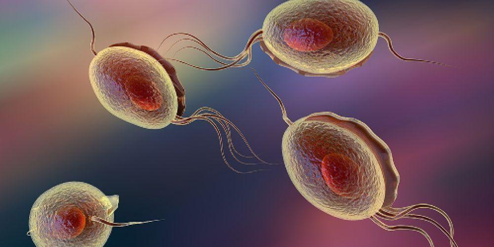 Gejala infeksi parasit trikomoniasis adalah sering keluar cairan bening dari penis dengan sendirinya